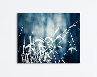 "Dark Blue Canvas, navy white gallery wrap nature print grass wall art large photography slate blue photo cream botanical photograph, ""Denim"""