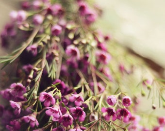 Flower photography, purple flowers, wax flowers, gold, romantic art, rustic decor, summer, fine art photo, green, botanical, floral wall art