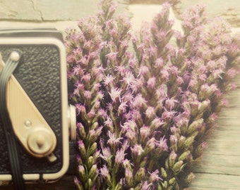 still life photo, french country decor, purple flower, nursery wall decor, camera photograph, romantic home decor, girls decor