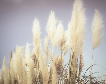 wall art, home decor, Grass, Ornamental, Pampas Grass, Stalks, Botanical - Blowing In The Wind