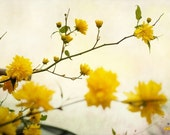 Yellow flowers, nature photograph, dreamy spring flowers, pastel yellow, 12x8, Giclee print