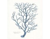 Coastal Decor Branch Sea Coral Giclee Art Print 8x10 French Blue