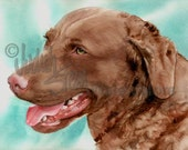 "Chesapeake Bay Retriever, AKC Sporting, Hunting Gun Dog, Pet Portrait Dog Art Watercolor Painting Print, Wall Art, Home Decor, ""Chessie"""
