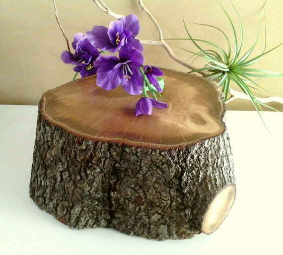 Large thick oak tree trunk log tree slice tree by jtlcreations for Large tree trunk slices