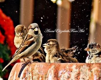 Bird  Photography,Nature, Portrait, Bird Decor, Birdbath,Bokeh,Color, Botanical,Whimsical,Wings,Garden,Floral,Baby Bird,Farmhouse, Americana