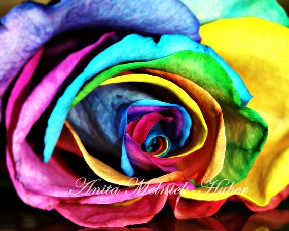 Rainbow Art, Rose Photograph,Still Life,Color,Rainbow Theme Nursery, Yellow,Blue,Pink,Wall Art,Fashion Photography,Preppy Print ,Shabby Chic