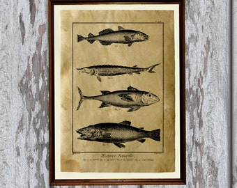 Fish art print Old paper Antiqued decoration vintage looking AK65