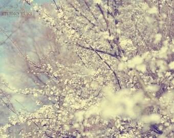 Cherry Blossom Photography, Blue Sky, White Wedding, Sakura Tree, Dreamy Landscape, Botanical Print, Floral, Nature, Bridal Gift, Pastel