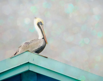 Pelican Art, Seabird Photograph, Bird Picture, Seaside Wall Art, Aqua Blue and Gray Decor, Coastal Photography