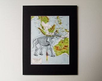 "Original Elephant Skeleton Mounted Print on Vintage Map of Australia, 11 x 14"""