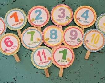 A LITTLE BIRDIE 1st Birthday Photo Clips Banner Newborn - 12 months  - Party Packs Available