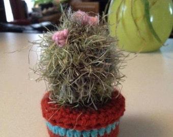Miniature cactus pincushion