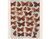 Butterfly Decor, Vintage Insect Print, Wall Art, Home Decor, 1942 Book Plate LXI