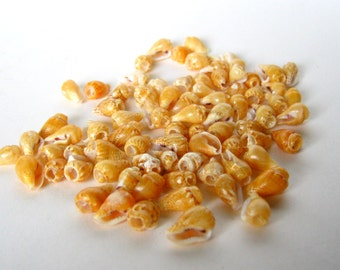 real seashell beads - last 75 - 10mm
