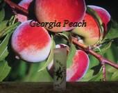 """Organic """"Georgia Peach"""" Lip Balm - 31 Luscious Flavors - 100% Natural"""