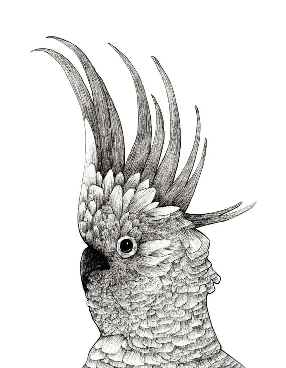 Cockatoo Drawing Cockatoo Bird Ink Drawing
