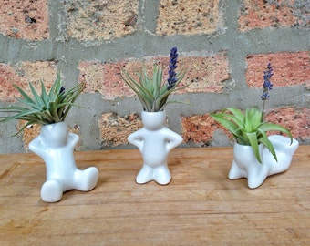 Air Plant Buddies - These little guys are perfect for your desk, nightstand or bathroom