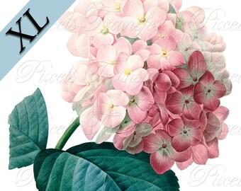 HYDRANGEA JPG XL 12x16.5 inch, Digital Downloads collage sheet pink flowers wedding clipart Redoute