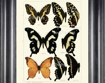 BUTTERFLY PRINT SEITZ  Botanical Art Print 13 Beautiful Antique Butterflies Hesperus Constantinus, Demodocus Summer Flower Garden Nature
