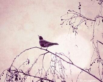 "Nature Photography - bird under a purple moon, purple photograph, minimalistic, bird wall prints, home decor, tree, night -  ""Illumination"""