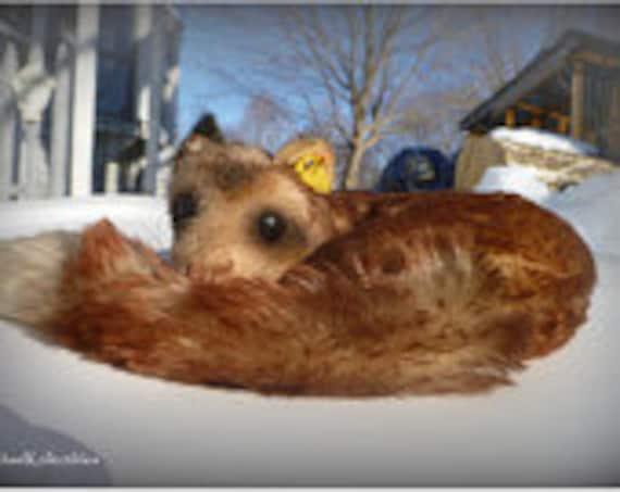 Vintage Steiff Ferret/Weasel Dormy