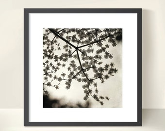 Spring Blossoms on a Tree Branch. Nature Photography. Monochrome Botanical Print by OneFrameStories.