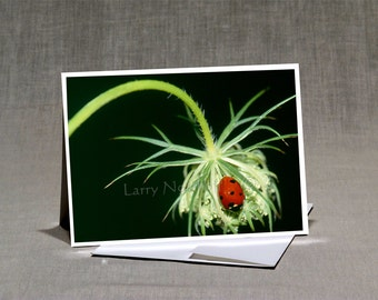 Prints-Greeting Cards-5x7 Set of-5-Original Photos-Blank Inside--Prints from 8x12-Nature and Outdoor Photos- SET 005