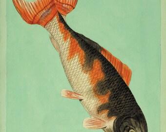 Antique fish art print koi art  Nautical art print Ocean decor sea art print fish wall art antique prints Chinese art print Wall poster art