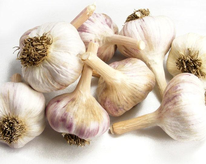Persian Star Garlic Bulbs Organic Grown Gourmet 1 Lb For Planting or Cooking - Fall Shipping