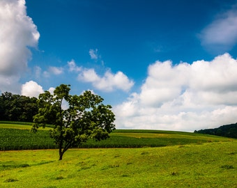 Clouds over tree and farmland in the Pennsylvania countryside - Rural Landscape Photography Fine Art Print or Wrapped Canvas Home Decor