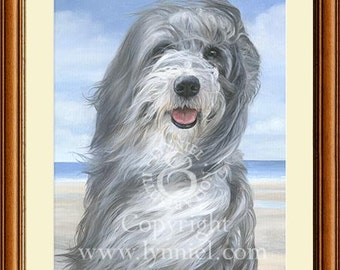 BEARDED COLLIE fine art dog print 'Willow'
