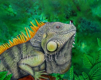 Cayman Green Iguana Drawing and Watercolor painting, 11x14 print