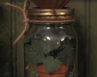 Ivy Plant in Jar