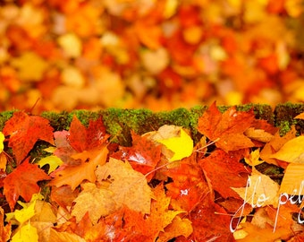 """Fall Photography, Autumn Photography, Nature Landscape, Red Leaves, Bright Colors, Blurry, Red, Colorful, Print- Falling Leaves.8X12""""/16x24"""""""