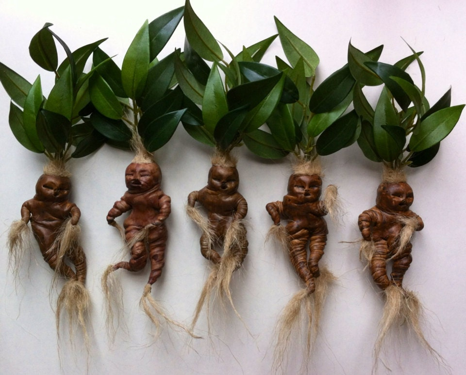 social satire in the mandrake root essay Machiavelli uses social satire as a form of high comedy in the mandrake root  the idea that all humans are self-interested and the corruption of the catholic.