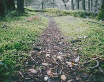 Forest Floor PDF Cross Stitch Pattern