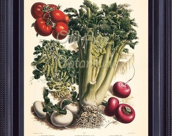 Vegetable GARDEN 8x10 Print Vintage Botanical Art FRENCH Plate 45 Tomatoes Celery Pea Turnips Seed Plants Kitchen Wall Decor FV0201