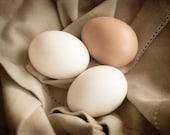 Eggs, Food Photography, Wall Art, Kitchen Decor, Dining Room Decor, Home Decor, Restaurant Decor, Egg Photography, Farmers' Market Photo