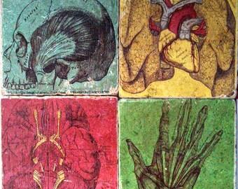 Painted Anatomy Marble Tile Coasters - Set of 4