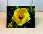 Beautiful Yellow Hibiscus, Set of 2 Photo Notecards Ready to Ship