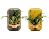 Set of 2 Small Air Plant Vases (Pictured in Slate and Mustard) Wooden Home Decor Air Plant Holder Wall Vases Rustic Miniature Vases - Timberandcompany