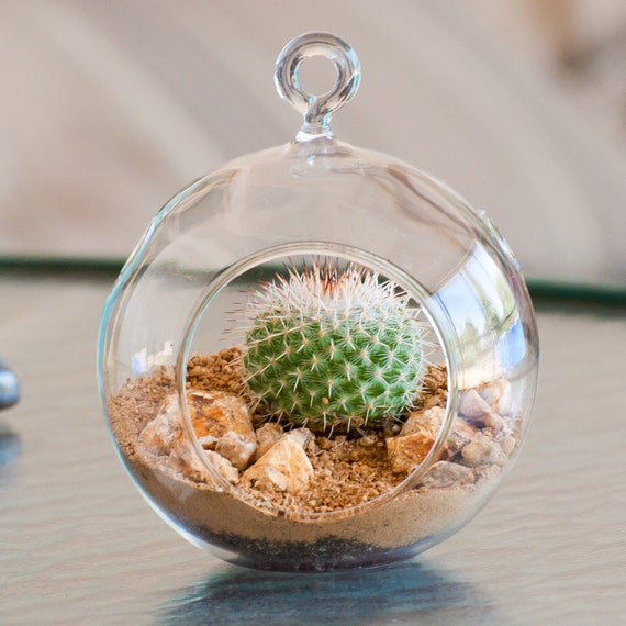 mammillaria mini succulent terrarium kit by shopsucculents on etsy. Black Bedroom Furniture Sets. Home Design Ideas