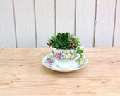 Antique Teacup with Assorted Succulents