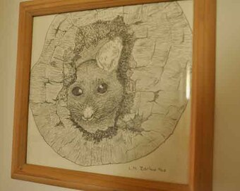 Possum in a hollow log, pencil sketch