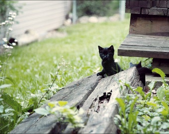 Hide and Seek -  Black Stray Kitten Cat - Color Photo Print - Fine Art Photography (CB06)