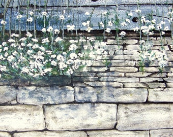Cottage with Trailing white flowers Watercolour Print.From an Original by Artist.T J Cleary. Printed on 140lb / 275gsm Paper