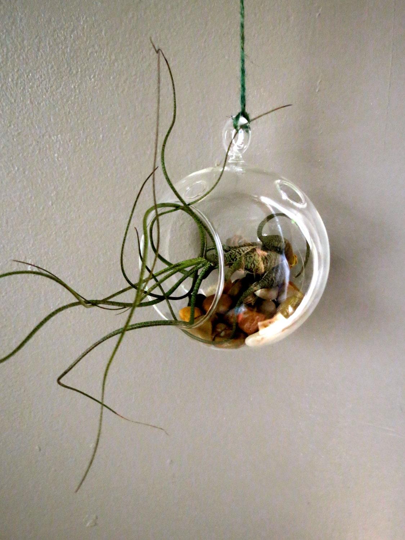 hanging air plant terrarium wonderful buzii in a hanging. Black Bedroom Furniture Sets. Home Design Ideas