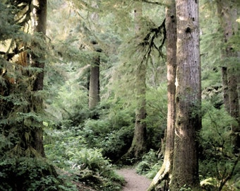 Oregon Forest Photo, Woodland art, Path into Woods, Tree Photo, Oregon Woodland Art, Path to Giant Blue Spruce, Digital Download JPEG file