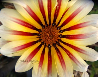 flower nature photography