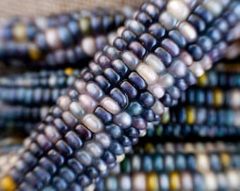 Sapphires and Pearls Glass Gem Cherokee Indian Corn Seed Pack
